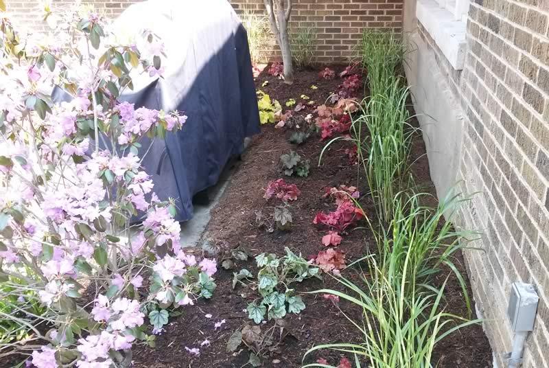 landscape porfolio - back garden