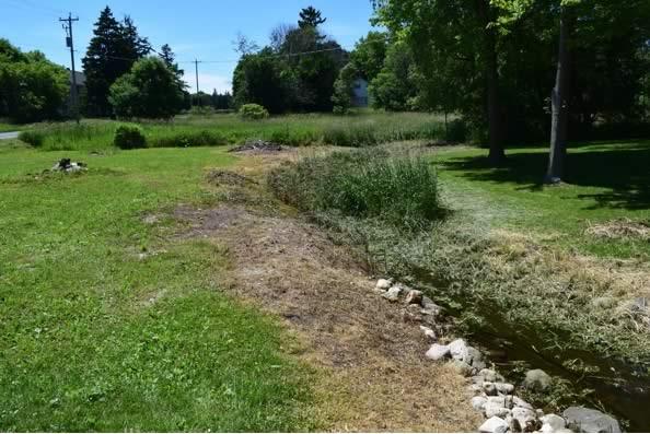 landscape porfolio - natural drainage before