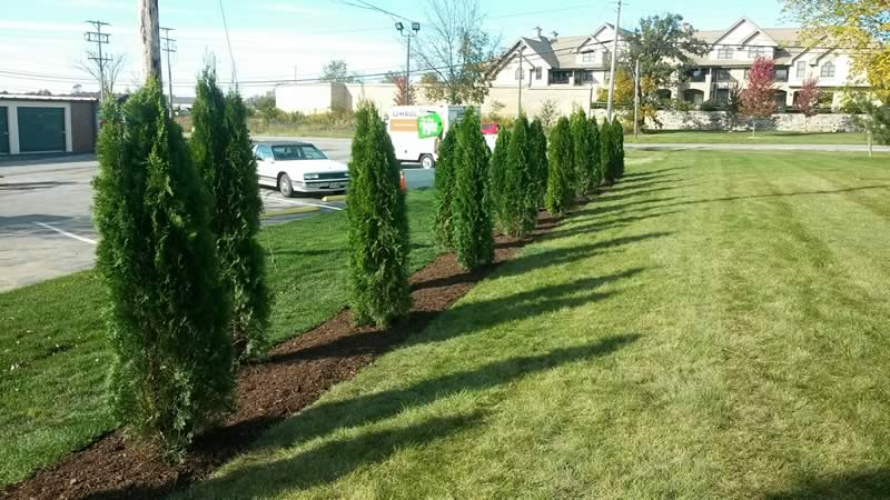 landscaping portfolio trees - Creative Touch Landscape Services